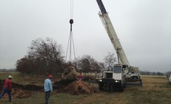 Crane Work for Spanish Oak