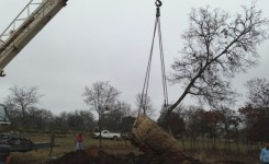 Lifting Spanish Oak 3