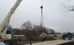 Lifting Spanish Oak
