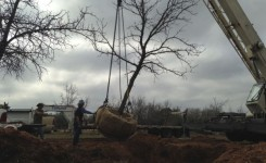 Moving Burr Oak