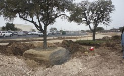Moving Large Live Oak 2